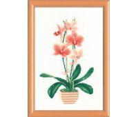 """1161 Набор для вышивания """"Риолис"""" Желтая орхидея 21х30 см"""